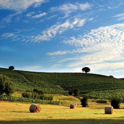 Asti and Monferrato: traditions & Barbera