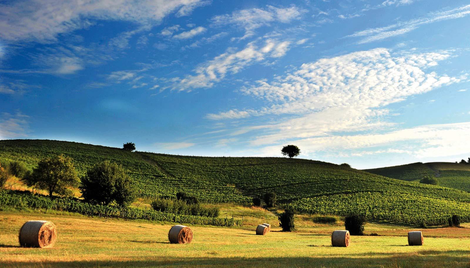 Asti and Monferrato: traditions & Barbera
