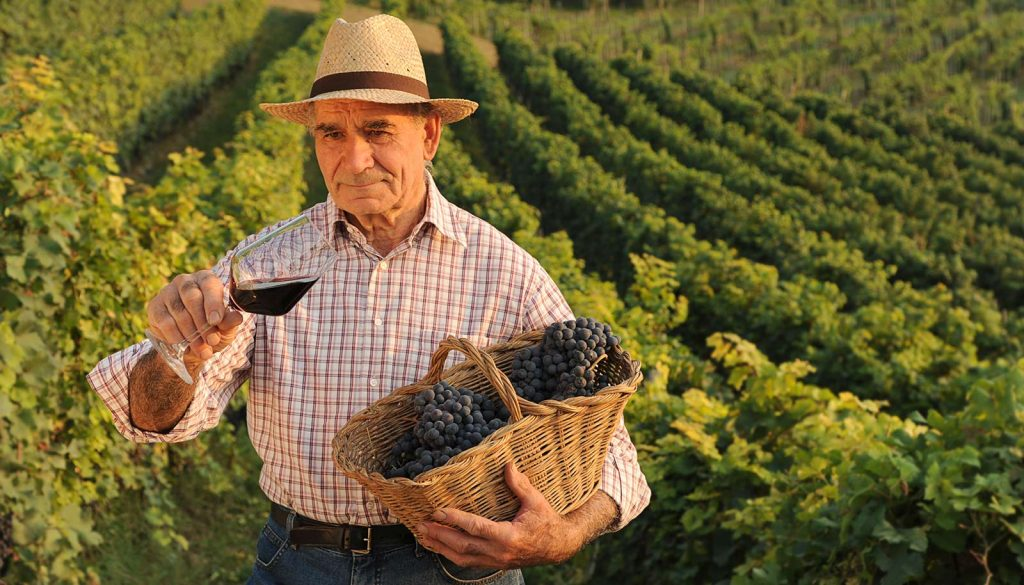 Truffle, wine and cooking experience - Langhe Experience Tours