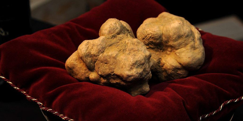 Alba White Truffle World Auction